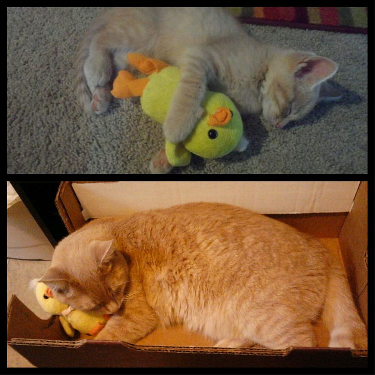 23 mascotas que siguen enamoradas de su primer juguete. ¡Qué tierna la #14!