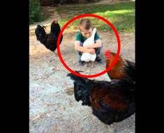 El vídeo del niño y la gallina que ENTERNECE a Internet