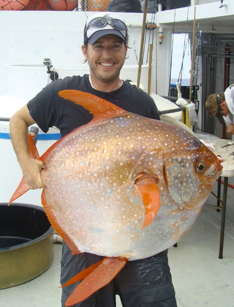 Científicos descubren SORPRENDIDOS el primer pez de sangre caliente del mundo