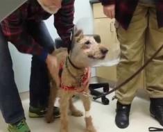 Este perro ha sido ciego toda su vida. Cuando finalmente VE A SU FAMILIA nos emocionamos