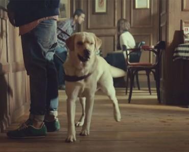 El perro guía ABANDONA a este hombre ciego, ¡pero cuando veas la razón te quedarás anonadado!