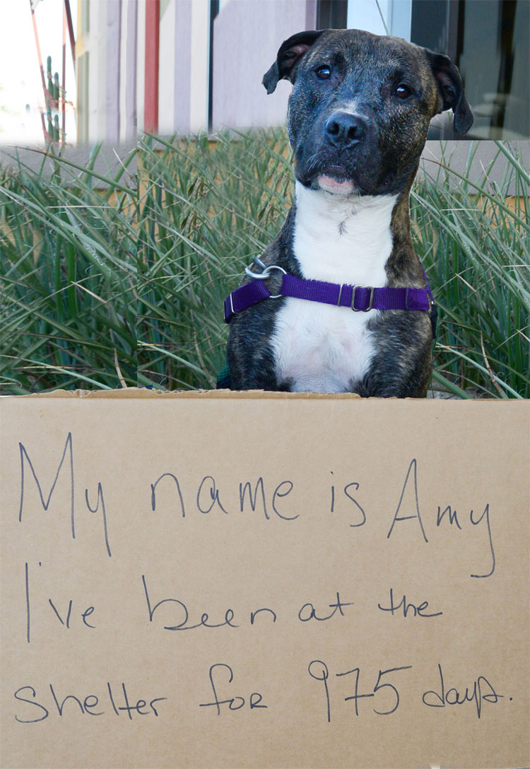 18 años y todavía no tiene hogar: La desgarradora historia del perro más ignorado de Estados Unidos