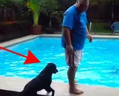 Se acerca hasta el borde de la piscina, ahora ATENTOS al perro que tiene detrás