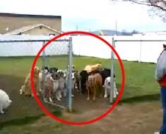 Puso 16 perros detrás de una cerca. Ahora mira lo que HACEN (atención al último)