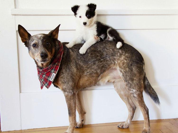 19 perros ENAMORADOS del nuevo cachorro. Atención al #12