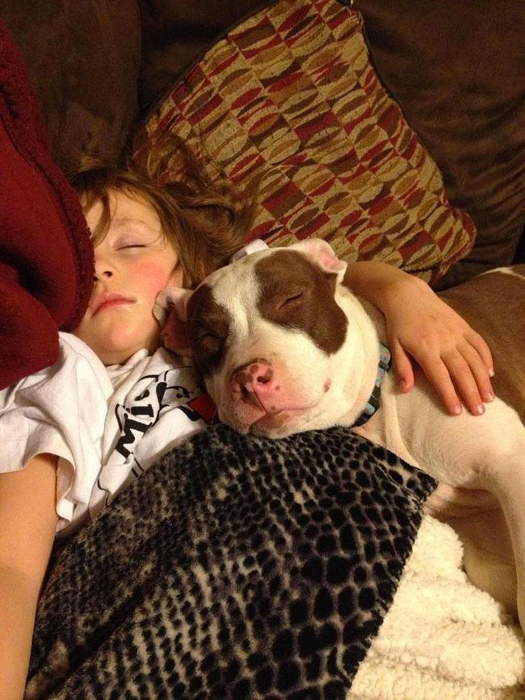 21 razones por las cuales los Pit bulls son los MEJORES cuidadores del mundo