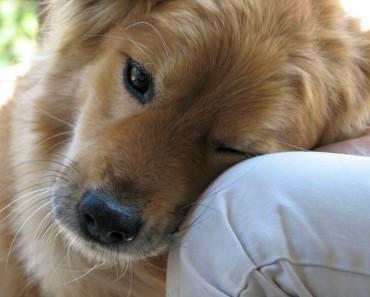poema-mas-bonito-perros
