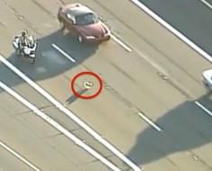 Su perrito huyó de un accidente automovilístico. ¿Qué hace la policía? Increíble