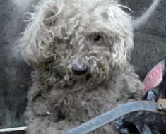 Encontraron a este perro ciego sobre un montón de basura. El final es una transformación INCREÍBLE