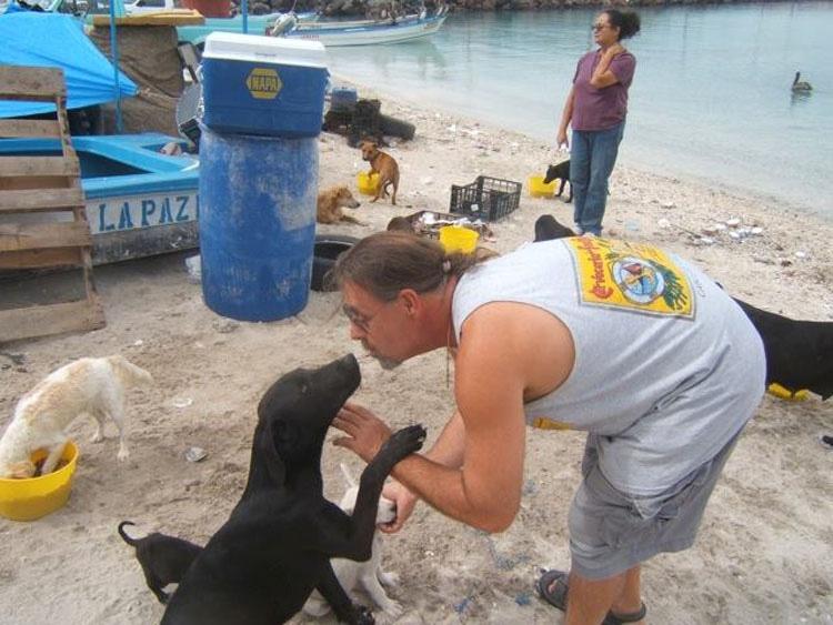 Mientras estaban de vacaciones esta pareja hizo algo SORPRENDENTE, ¡rescataron a 34 gatos y perros abandonados!