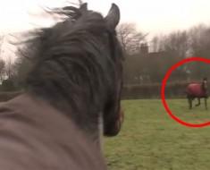 Después de varios años este caballo está a punto de reunirse con su mejor amigo. Su reacción es INCREÍBLE