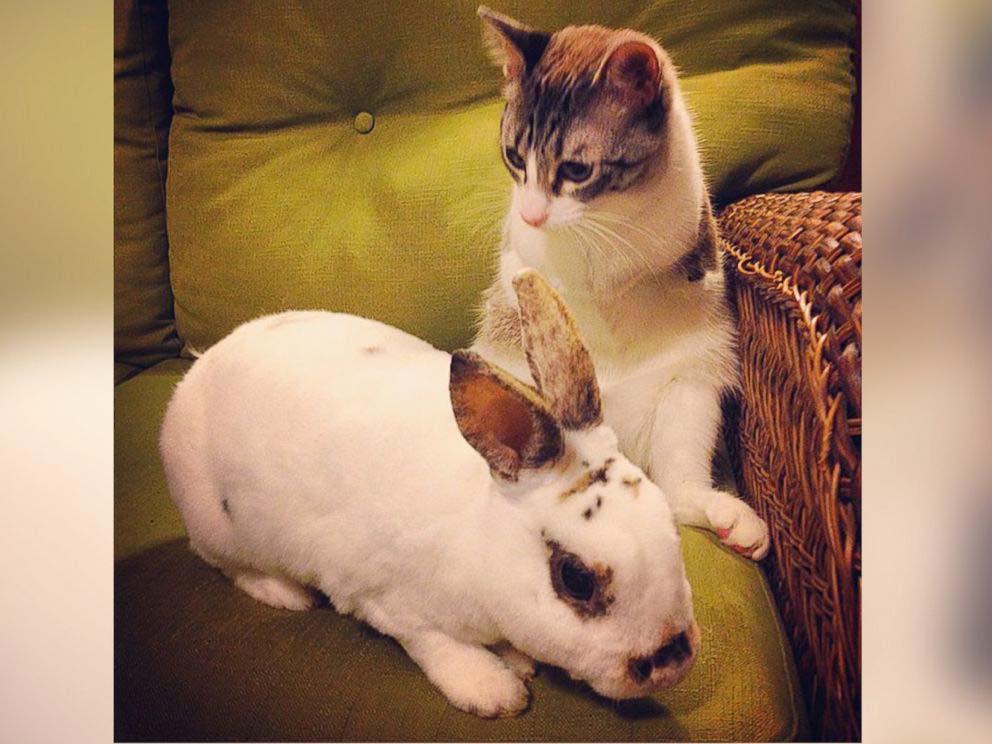 """Roux el """"gato-conejo"""" que sin patas delanteras NADA la frena y SORPRENDE a Internet"""