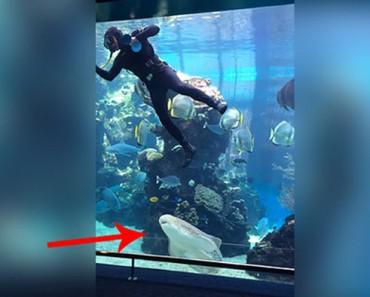 Cuando un tiburón sorprende a un buzo en un acuario, SUCEDE algo impresionante