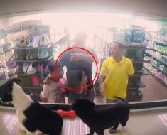 Esta tienda de mascotas sustituye secretamente todos los animales por animales RESCATADOS, los compradores se ENAMORAN de ellos