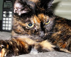 El gato más viejo del mundo muere a los 27 años, este era su SECRETO