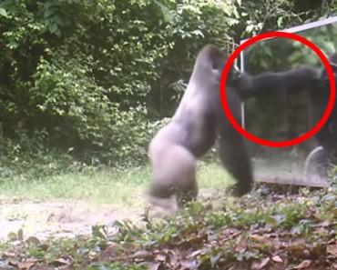 Así reaccionan estos animales salvajes al ver sus reflejos POR PRIMERA VEZ. ¡Alucinante!