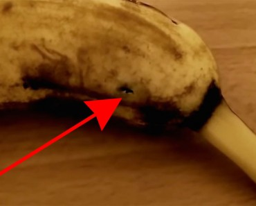 Filmaba un plátano cuando éste empezó a moverse. ¡Mira lo que sale de DENTRO!