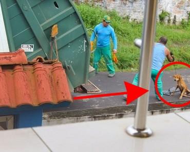 Este conductor de camión de basura arrojó a este perro al compactador de basura. Esta es la HISTORIA COMPLETA