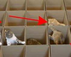 Tenían algunos cajas extra y crean algo ALUCINANTE... Para sus gatos