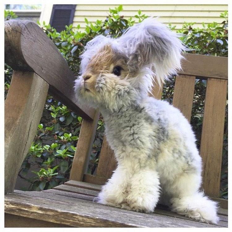 Este conejito de angora super-esponjoso es tan lindo, que ni siquiera parece REAL