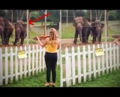 Ella comienza a tocar el violín, pero FíJATE en los elefantes. Su reacción es adorable