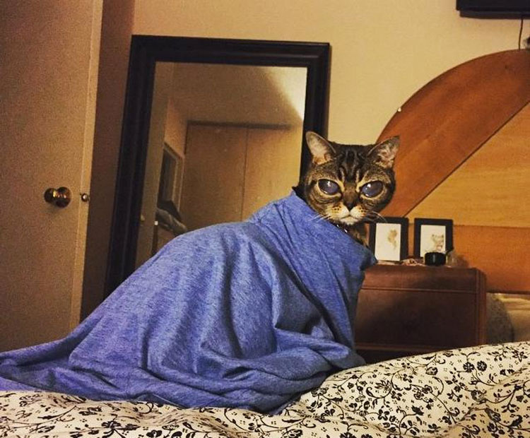 Esta encantadora gatita tiene una MISTERIOSA condición genética que le hace tener unos ojos realmente ENORMES
