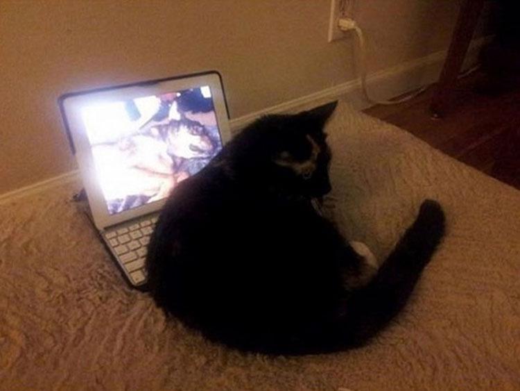 Encontró a su gata extrañamente sentada sobre su iPad pero cuando descubrió por qué... Él se echó a llorar