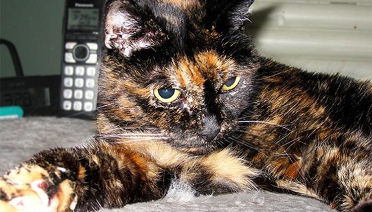 El gato más viejo del mundo muere a los 27 años, éste es su SECRETO