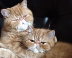 Estos gatos llevan MÁS de un millón de visitas en sólo unos días. ¿La Razón? ¡Son hilarantes!