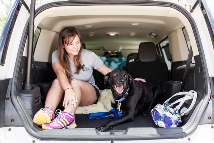 Desgarradora despedida con este homenaje con fotos a este adorable perro de tres patas