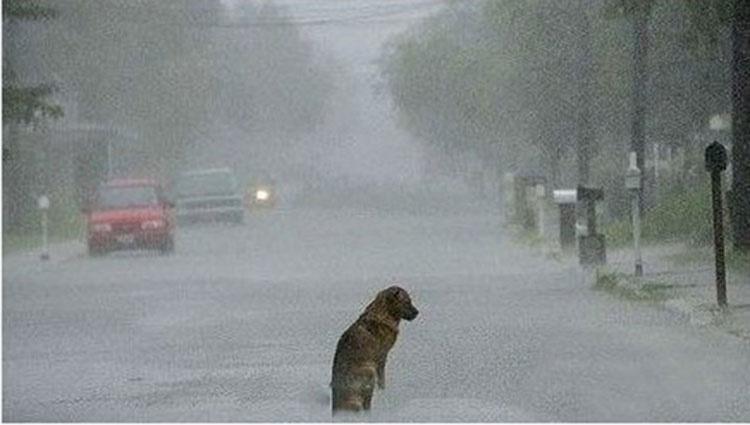 23 imágenes de perros (y sus historias) que te conmoverán hasta las lágrimas