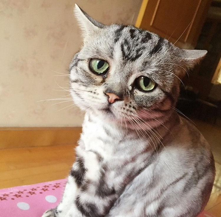 Tu nivel de ternura llegará al máximo al conocer a la gata más triste de Internet. ¡Prepárate!