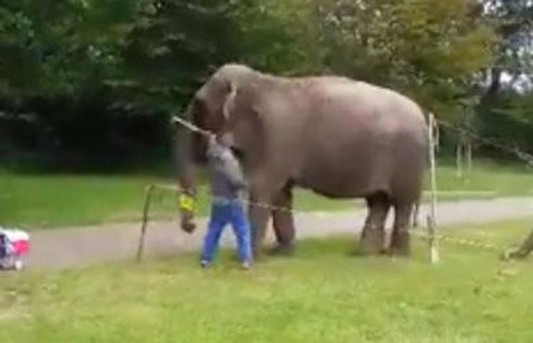 Este trabajador de un circo fue avergonzado públicamente por hacer ESTO a un elefante