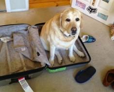 17 mascotas que no pueden creer que NO SE VAN de viaje con sus dueños. ¡La #16 es DIVERTIDÍSIMA!