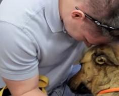 El momento en el que este perro se reencuentra con su dueño después de estar perdido durante 7 meses TE EMOCIONARÁ