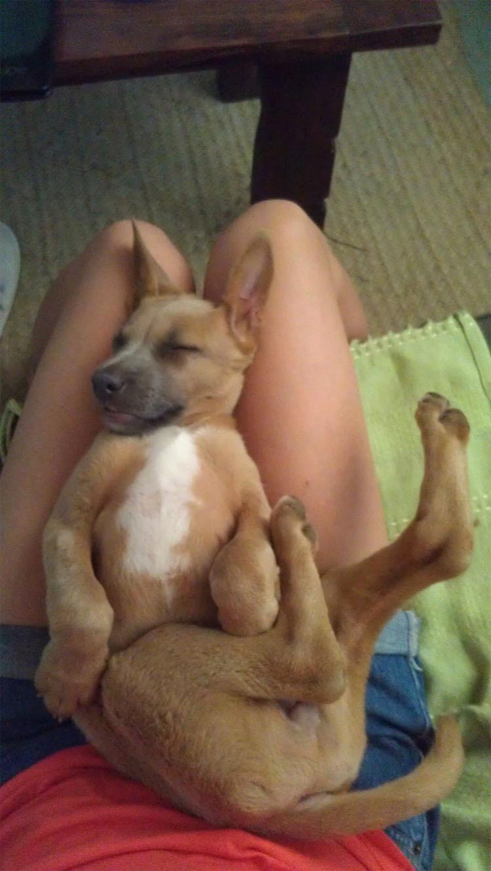 12 perros que NO PARECEN perros. Atención al #12