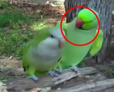 ATENTOS al pájaro de la derecha. ¡Va a hacer algo ABSOLUTAMENTE hilarante!
