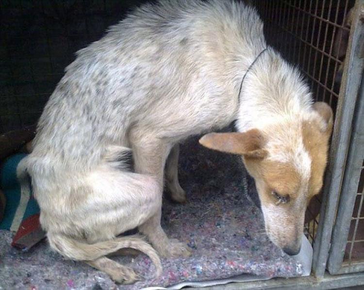 Esta perrita fue enterrada VIVA sólo por ser una perra callejera. Su fuerza te HARÁ LLORAR