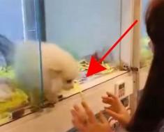 Este pequeño perrito quiere que lo adopten y HACE ESTO. ¡Absolutamente ADORABLE!
