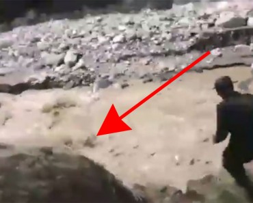 Estos policías encuentran un perro arrastrado por una fuerte corriente. La historia TERMINA ASÍ