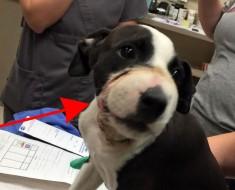 ¡NUEVO CASO! Alguien cerró la boca a este perrito y todavía no ha sido encontrado su agresor