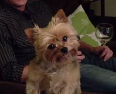 Le dijo a su perro a dónde quiere ir mañana. ¡La reacción del perro NO TIENE PRECIO!