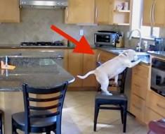 Pusieron una cámara oculta porque siempre DESAPARECÍAN los nuggets de pollo. ESTA era la razón