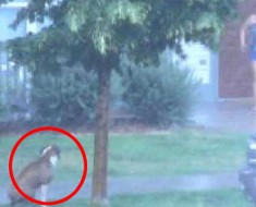 Este perro abandonado en mitad de una tormenta TERRIBLE es rescatado por un vecino. Este es el VÍDEO