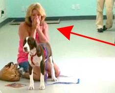 Después de 3 años, realizan un milagro con su perro paralizado. Éste es el MOMENTO DEL REENCUENTRO