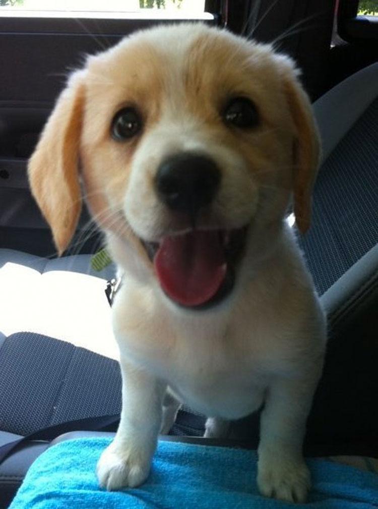 15 perros recién adoptados que muestran pura alegría cuando los llevan a su nuevo hogar