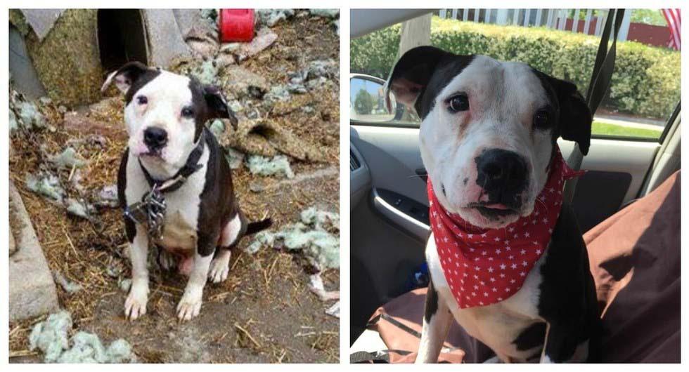 Estos perros han pasado sus vidas ENCADENADOS hasta que fueron LIBERADOS. ¡Mira como cabiaron!