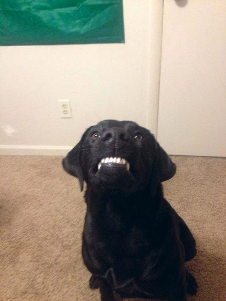 28 Perros hilarantes reaccionando ante cosas tontas que hacen los humanos