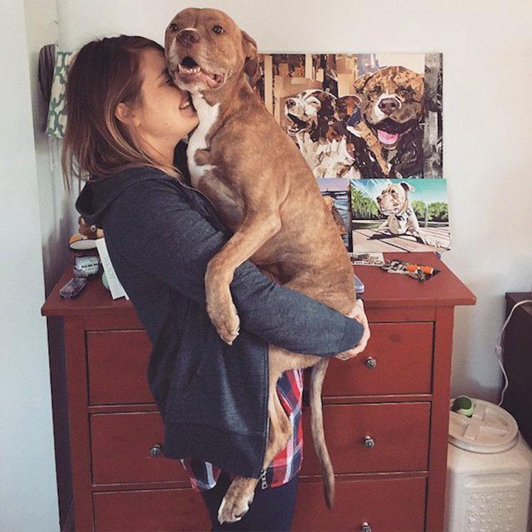 Pitbull que perdió dos patas tras recibir un disparo ahora es una inspiración para todos los que lo conocen