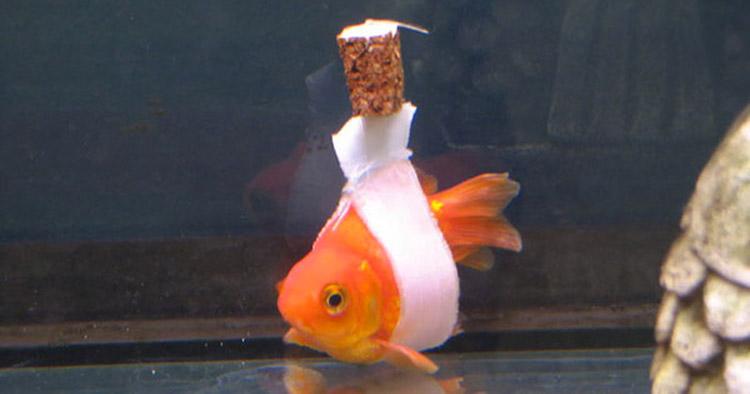 En vez de dejar morir a su pez enfermo, crea una SOLUCIÓN impresionante